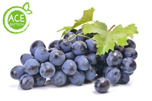 grape seed extract from Guangzhou Ace Biotech
