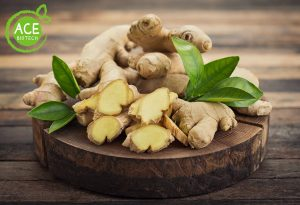 zingiber officinale root extract