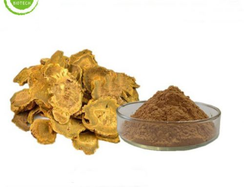 Rhubarb extract powder for weight loss for sale cheap price
