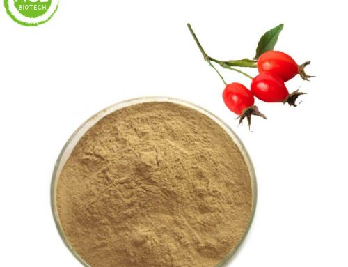 Rose hips extract for weight loss cheap price wholesale