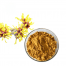 witch hazel alcohol extract