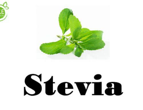 10 things you should know about stevia powder