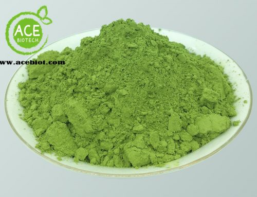 10 things you should know about matcha powder